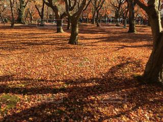 京都,落ち葉