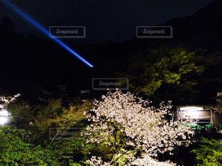 夜,京都,観光,ライトアップ