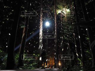 森の中のミラーボールの写真・画像素材[922080]