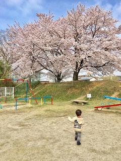 公園で凧の飛行少年の写真・画像素材[912042]