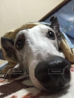 犬 - No.29143