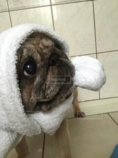 犬 - No.29295