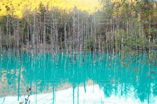 近くに池のアップ - No.912266