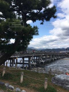 京都,観光,嵐山,野外