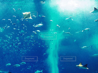 魚,綺麗,青,水,幻想的,水族館,沖縄,鮮やか,光,観光,爽やか,水中,旅行,ブルー,美ら海水族館,インスタ映え
