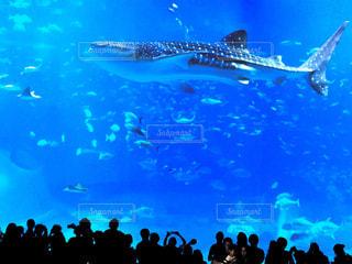 魚,綺麗,青,水,水族館,沖縄,鮮やか,観光,爽やか,水中,旅行,ブルー,美ら海水族館,ジンベイザメ,ジンベエザメ,フォトジェニック,インスタ映え