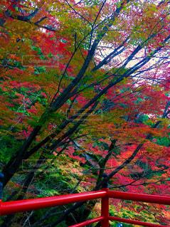 紅葉 - No.927776