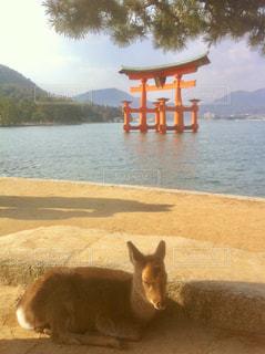 厳島神社の写真・画像素材[963617]