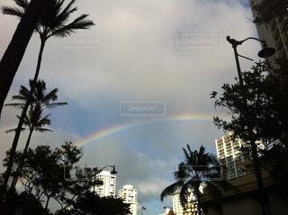 自然,空,虹,アメリカ,レインボー,観光,旅行,ヤシ,ハワイ,ワイキキ,オアフ島,パーム