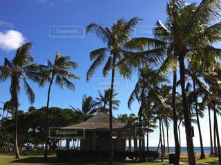 海,空,青空,アメリカ,観光,旅行,ヤシ,ハワイ,ワイキキ,オアフ島