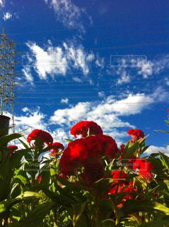 青空と花の写真・画像素材[1118859]