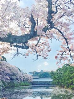 彦根城の写真・画像素材[1157950]