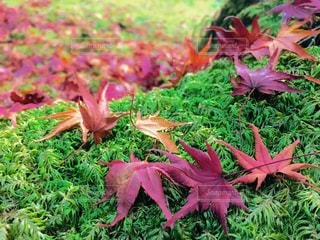 秋の色の写真・画像素材[1635647]
