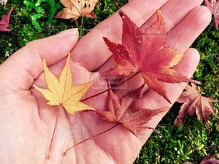 秋の色の写真・画像素材[1653631]