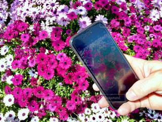 鮮やかな花の写真・画像素材[2284033]