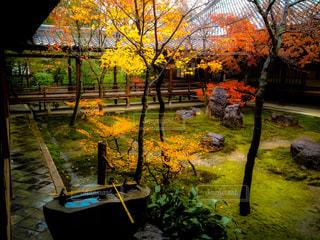 公園,屋外,京都,観光,草,樹木,庭園