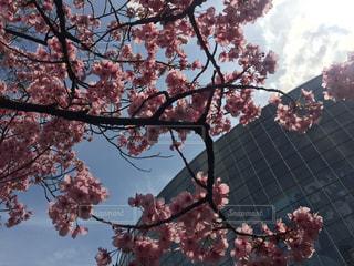 空,桜,TOKYO,都会,東京都,六本木,Travel,trip,さくら,テレビ朝日,東京旅行