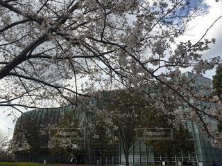 桜,建築物,TOKYO,都会,東京都,六本木,赤坂,Travel,trip,ガラス張り,さくら,湾曲,東京旅行