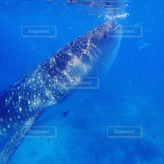 水面下を泳ぐ魚たちの写真・画像素材[916046]