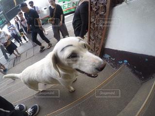 カメラにポーズを鏡の前で犬の地位 - No.1154945