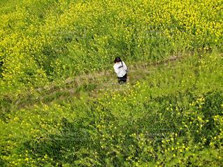 緑豊かな緑のフィールドに立っている鳥 - No.1156405