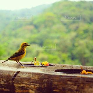 木製の表面に座っている小さな鳥 - No.1159022