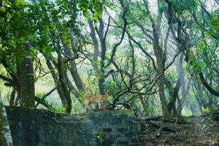 森の大きな木 - No.1181562
