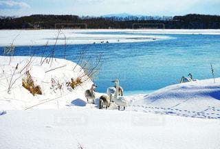 雪で覆われている犬の写真・画像素材[1201192]