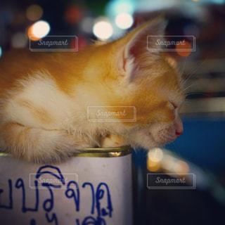 コップから飲むオレンジと白猫の写真・画像素材[1255301]