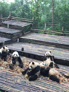 木製フェンスの上に座っているぬいぐるみの動物のグループ - No.1256000
