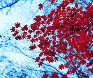 近くの木のアップの写真・画像素材[1616708]