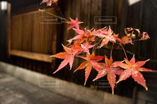 風景,紅葉,京都,祇園