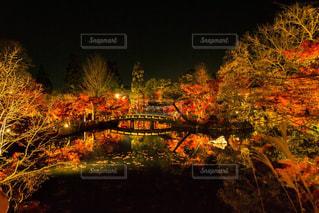 秋,紅葉,京都,旅行,旅,写真,日本,KYOTO,japan,永観堂
