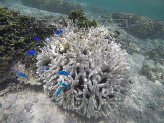 サンゴ礁の写真・画像素材[941987]