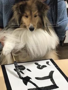書初め犬の写真・画像素材[973204]