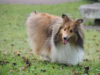草の上に犬立ってカバー フィールドの写真・画像素材[978423]