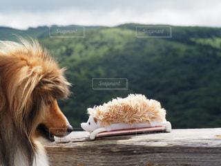 茶色と白犬の写真・画像素材[978430]
