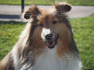 近くに犬のアップの写真・画像素材[979419]
