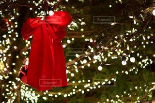 赤,イルミネーション,リボン,クリスマス,ツリー