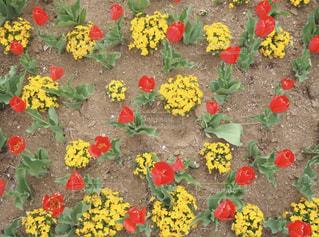 色とりどりの花のグループの写真・画像素材[1261799]