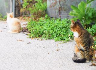 猫を見つめるねこ - No.1262354