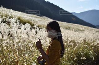 仙石原のススキの写真・画像素材[1602628]