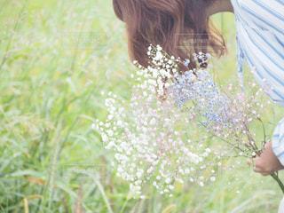 かすみ草の写真・画像素材[3088137]