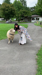 羊を連れての写真・画像素材[3105933]