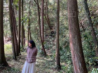 森の中をお散歩の写真・画像素材[4277893]