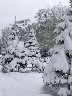 札幌の雪景色の写真・画像素材[914814]