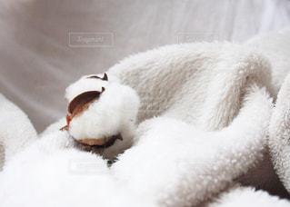 cottonball - No.914721