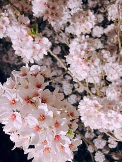 近くの花のアップ - No.1141409