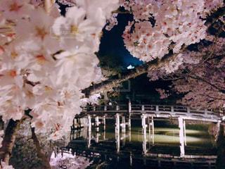 近くの花のアップ - No.1141473