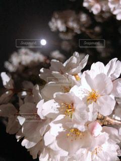 近くの花のアップ - No.1141481